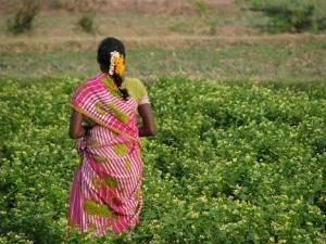 india-green-revolution